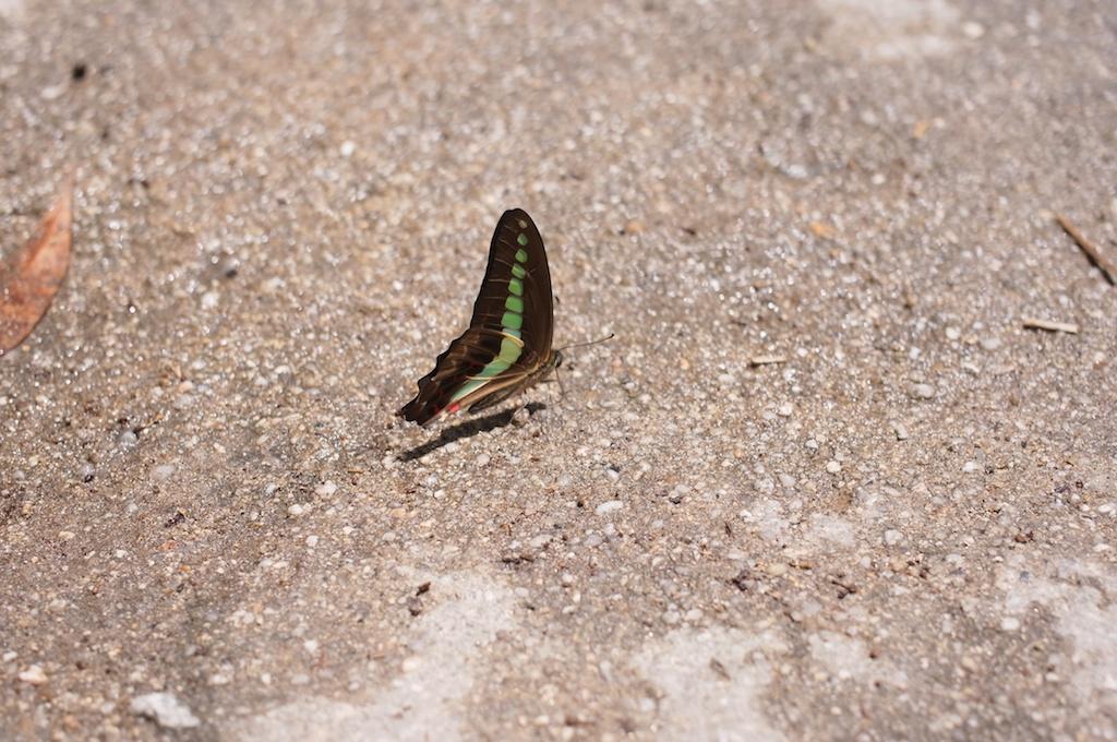 蝶も涼んでる!