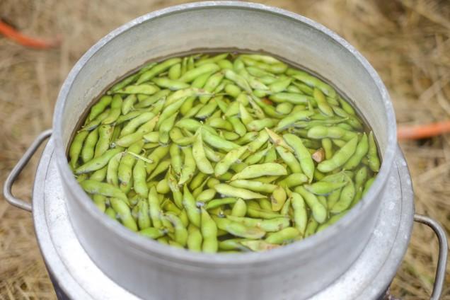 当然茹でたての枝豆も大量に!