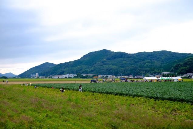 手前が枝豆畑で、奥のテントがある場所が会場