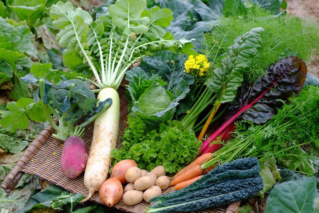 この日に獲れた野菜!