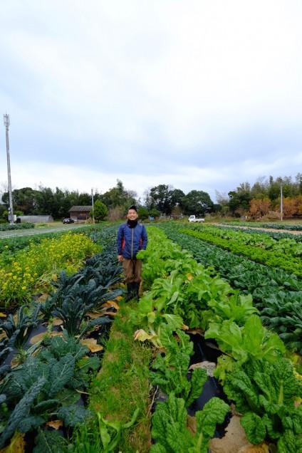 たくさんの野菜が育っています