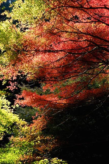 素晴らしい紅葉を見ることができます