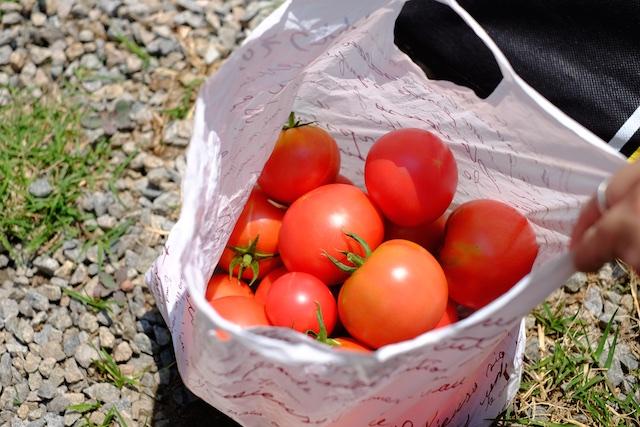 トマトに狙いを定めて大量に収穫した方も!
