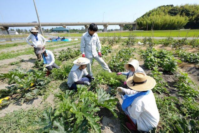 野菜の話をしながら楽しく収穫